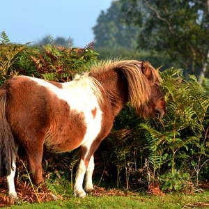 PetSitting-Pony-1